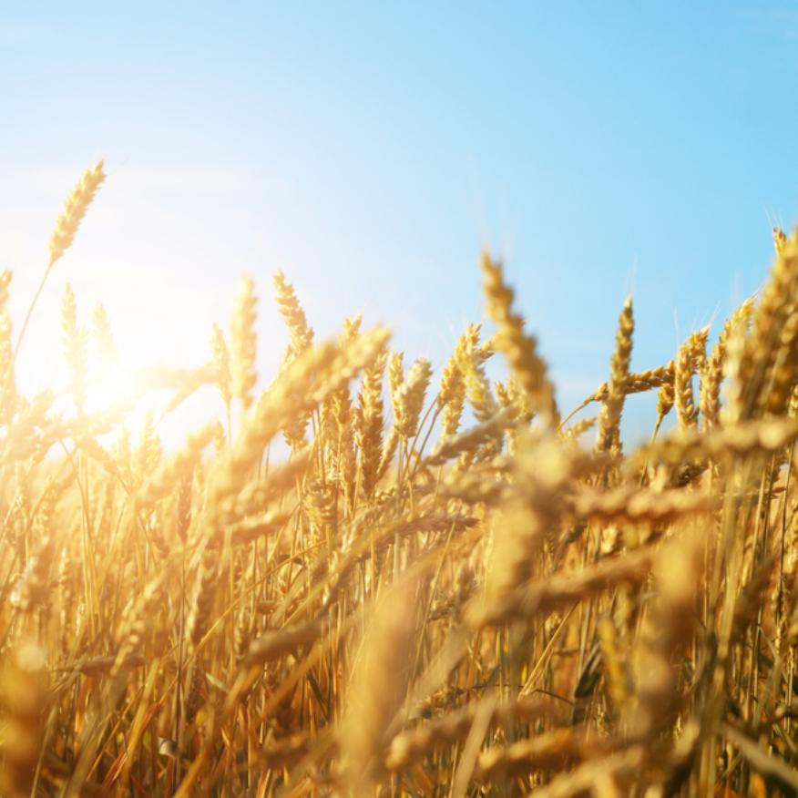 Aveeno® etisk jordbruk & inköp